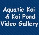 Aquatic Koi!